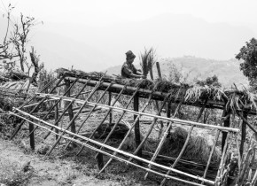 """Dal Bahadur Gurung, 64, used the traditional materials like """"Khar"""", Bamboo and woods to make temporary shelter at Simjung village in Gorkha. Many villagers did not wait the tent that may come to them on relief. Villagers in mid-hills Gorkha started to cope with the aftermath of the earthquake from the next day."""
