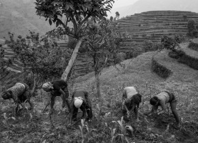 Farmers, the victim of earthquake from Simjung Village, spade the maize field as they see food security that can sustain then for the coming monsoon in local level.